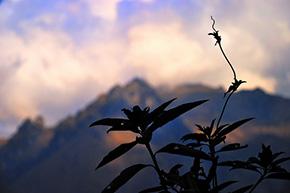 Excursión Salkantay Flora