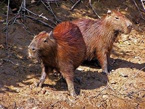 Fauna Selva Perú