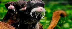 Isla Monkey